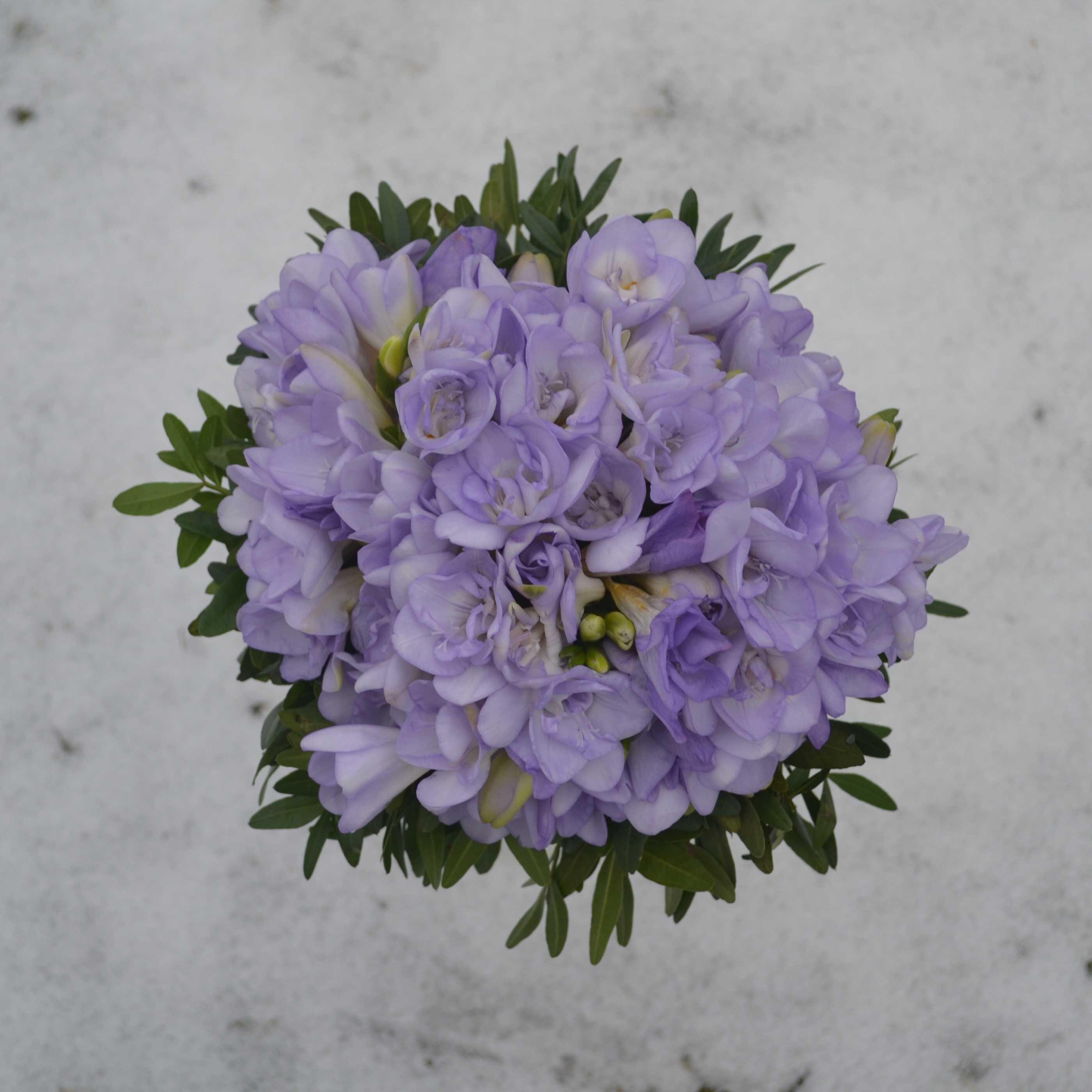 svatební kytice z frézií a voňavého eukaliptu